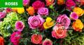 florists-decor-mascons-agrotech-ltd-small-0
