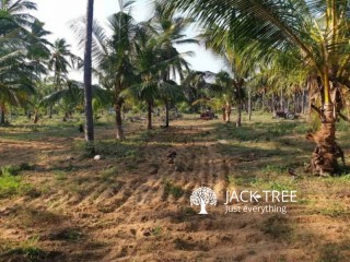 Coconut land for sale in palai town.