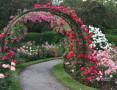 rose-garden-small-0