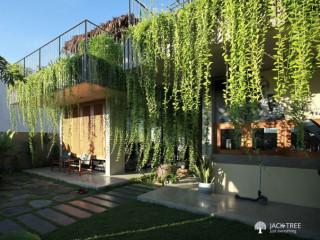 Vernonia / Curtain creepers plants availble
