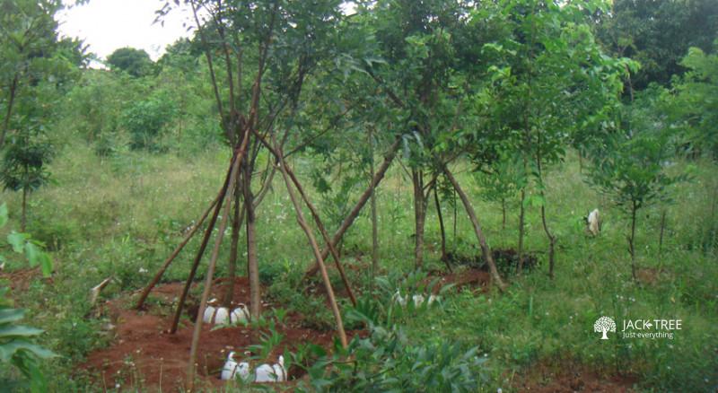 dasuns-house-plants-nursery-and-root-balling-of-wide-range-big-0