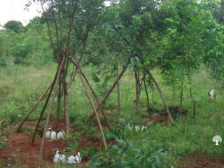 Kadawatha Garden Service and S&S Interlock Pavers,Plant Nursery