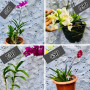 the-plant-home-agricultural-service-plants-in-sri-lanka-small-0