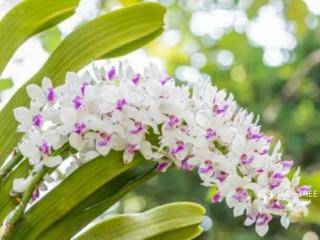Plants for sale(Dendrobium Orchids,Vanda Orchids,Foxtail Orchids)