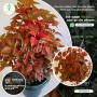 diyatha-plants-home-garden-website-plants-for-home-small-0