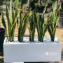 live-plants-shop-srilanka-plants-for-sale-weligama-small-0
