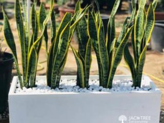 Live plants shop srilanka (plants for sale) weligama
