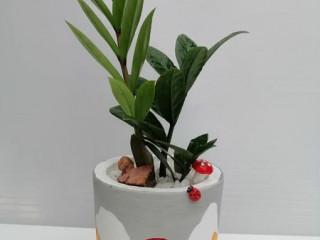 Plants for sale is in Batticaloa (Indoor Plants & Outdoor Plants)
