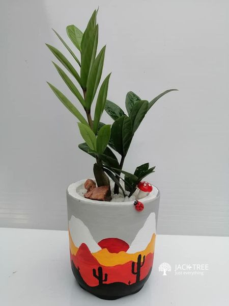 plants-for-sale-is-in-batticaloa-indoor-plants-outdoor-plants-big-0