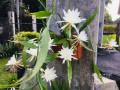 flower-station-srilanka-small-0