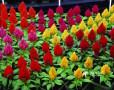 hansani-landscaping-plants-nursery-plants-for-sale-in-sri-lanka-small-0