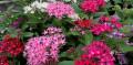 plant-nursary-plants-sale-in-sri-lanka-small-0