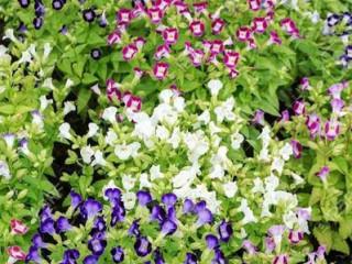 Hansani landscaping & plants nursery kandy srilanka