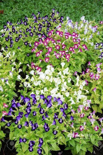hansani-landscaping-plants-nursery-kandy-srilanka-big-0