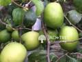 lkr-2-srilanka-plant-small-0