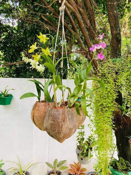 coconut-pot-big-0