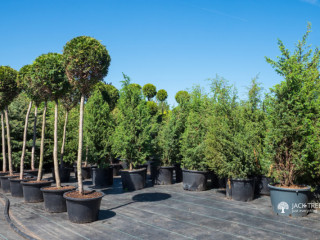 Indoor Plants & Outdoor Plants - Sri Lanka