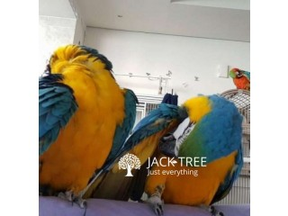 All Species of Parrots and Their Fertile Eggs for sale