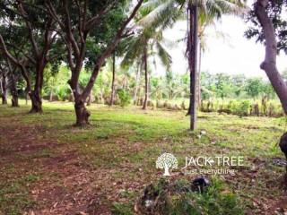 Prime Land for sale in Dambulla