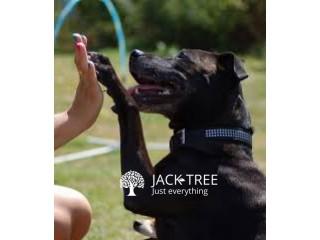 Dog Training (සුනඛයන් පුහුණු කිරීම)