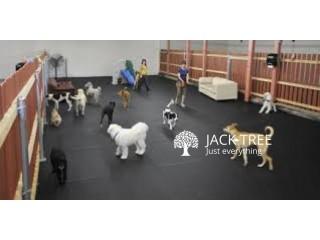 Dog Daycare service