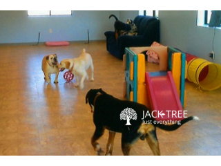 Dog Boarding / Day Care