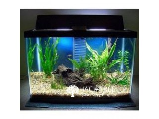 Planted Boyu Fish Tank