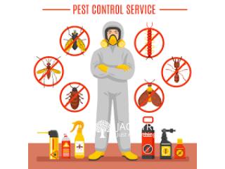 Pest Control & Termite