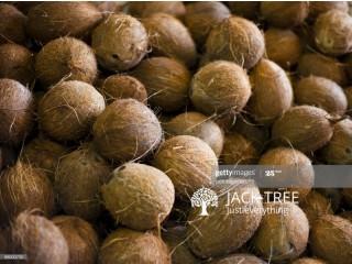 Coconut pol sale