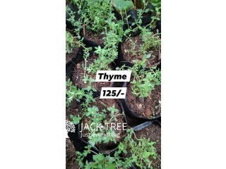 Herbs plants /vegetable Fertilizer /Flower Pots