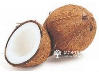 පොල් - Coconut