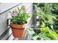flower-pot-small-0