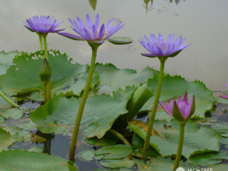 Manel Plant