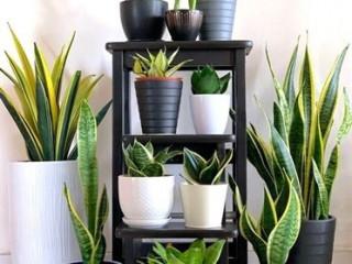 Ornamen Plants