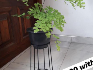 Plant stands and plants